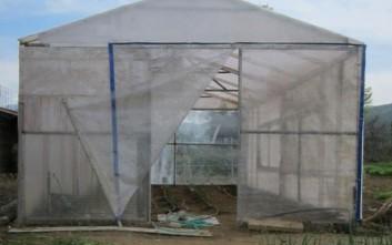 Μεγάλη χασισοφυτεία εντοπίστηκε σε θερμοκήπιο στο Λασίθι
