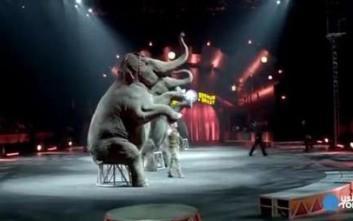 Τέλος οι ελέφαντες από μεγάλο τσίρκο των ΗΠΑ