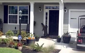 Η... επίσκεψη ενός αλιγάτορα σε κατοικία στη Νότια Καρολίνα