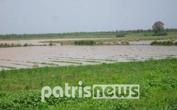 Κάτω από το νερό και τη λάσπη χάθηκαν οι καλλιέργειες της Ηλείας