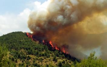 Συναγερμός για πυρκαγιά στη Βοιωτία