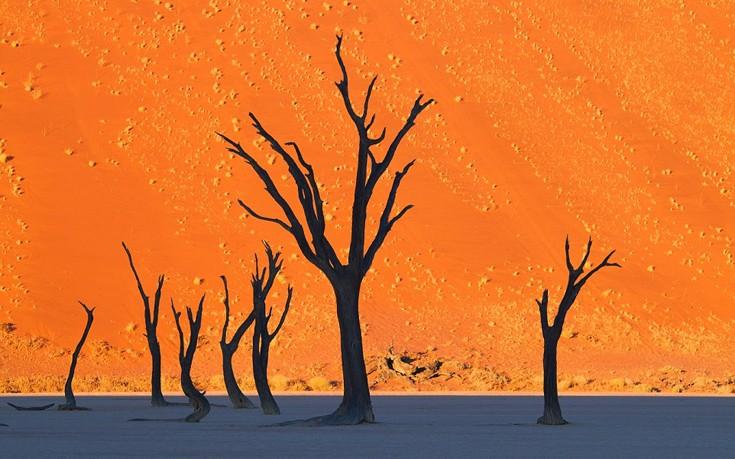 Η έντονη χρωματική αντίθεση των δέντρων με το κίτρινο φόντο των αμμόλοφων στην περιοχή Dead Vlei στη Ναμίμπια.