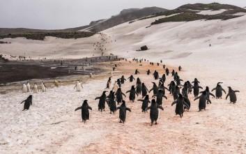 Ταξιδεύοντας στην «πιο επικίνδυνη θάλασσα» της Ανταρκτικής