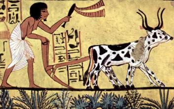 Η γεωργία «εφευρέθηκε» στη Μέση Ανατολή πάνω από μία φορά