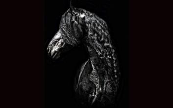 Ο King Kai δεύτερος διεκδικητής του τίτλου του ωραιότερου αλόγου στον κόσμο