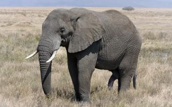 Πεινασμένος ελέφαντος εισέβαλε σε χωριό για να βρει τροφή