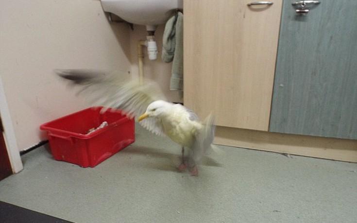 birdcary5