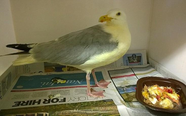 birdcary6