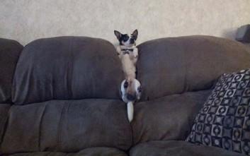 Σκύλοι και μπερδέματα στους καναπέδες