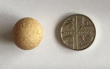 Αυτό είναι το μικρότερο αυγό κότας του κόσμου