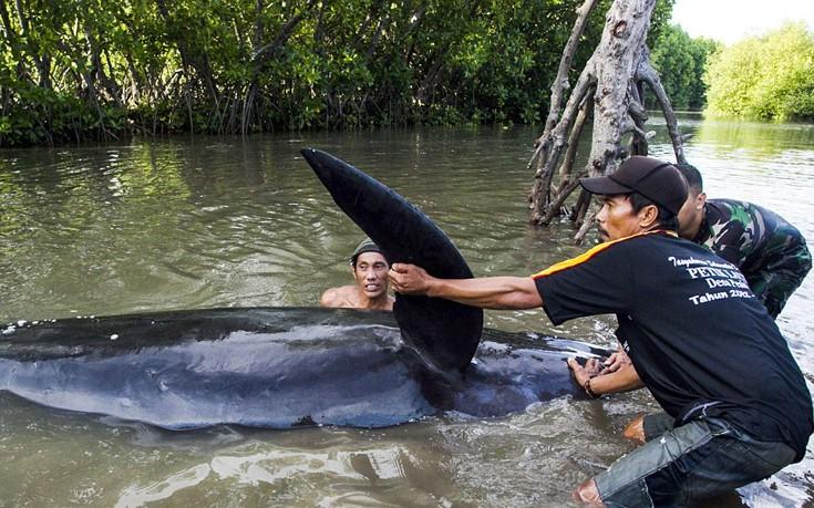 falainesindonesia2