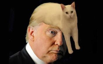 Η άσπρη γάτα που σαρώνει το ίντερνετ