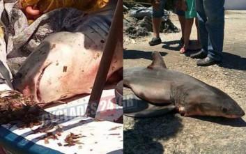 Λευκός καρχαρίας πιάστηκε στην Σύρο