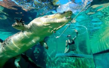 Το κολύμπι μιας νεαρής σε απόσταση αναπνοής από έναν κροκόδειλο