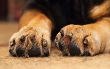 Μαζική δηλητηρίαση σκύλων στο Μεσολόγγι