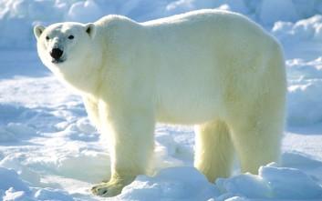 Αρκούδα σκότωσε πατέρα που προστάτευσε τις δυο κόρες του