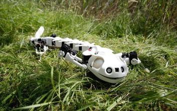 Το ρομπότ-σαλαμάνδρα που κατασκευάστηκε από Ελβετούς επιστήμονες
