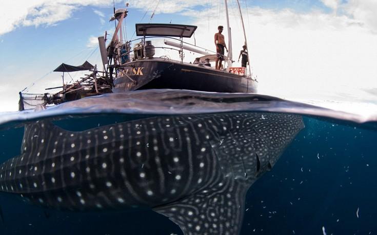 φαλαινοκαρχαρίες
