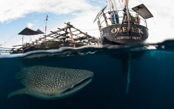 Εκεί που φαλαινοκαρχαρίες και άνθρωποι συνυπάρχουν αρμονικά