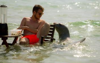 Αρχιπέλαγος: Η φώκια Αργυρώ της Σάμου είναι ένα σαρκοφάγο άγριο θηλαστικό 130 κιλών