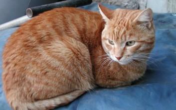 608f4976e8e1 Δύο χρόνια φυλάκιση και χρηματικό πρόστιμο επειδή σκότωσε τη γάτα της  γειτόνισσας