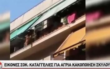 Βίντεο-σοκ με την πτώση σκύλου από 3ο όροφο