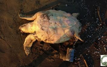 Σκότωσαν καρέτα-καρέτα αργά και βασανιστικά στη Νάξο