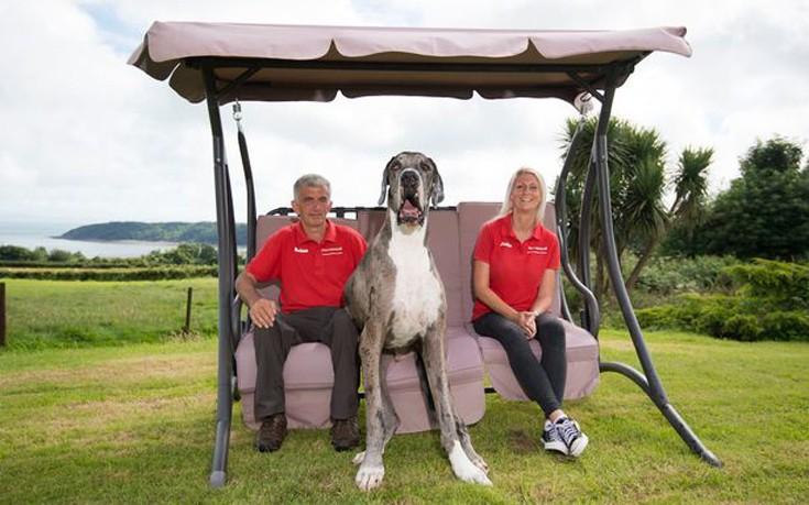 Σκύλος μεγαλύτερος σκύλος