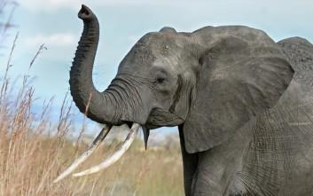 Τέλος οι τουριστικές βόλτες με ελέφαντες στην Καμπότζη