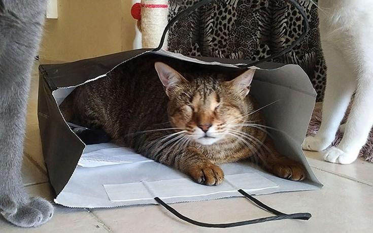 τυφλές γάτες