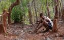 Τα αδέρφια Μόγληδες που περιπλανώνται στη ζούγκλα με τα άγρια ζώα