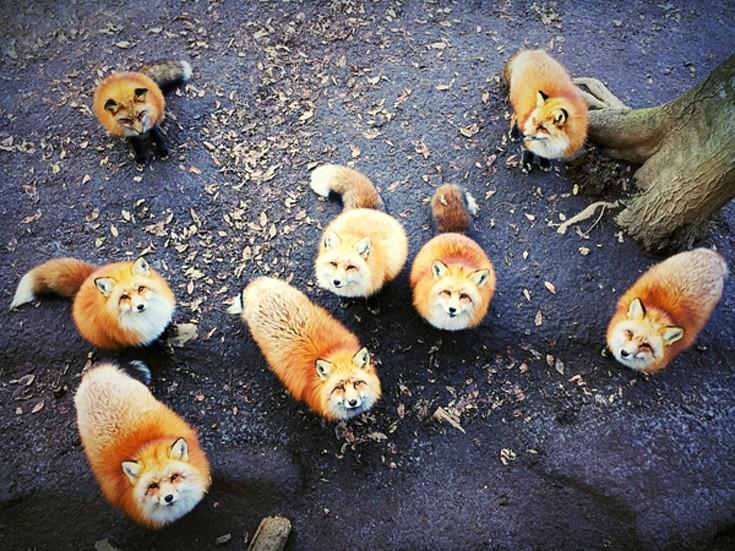 Φωτογραφία της Erica Wu από το Σαν Φρανσίσκο Καλιφόρνια, των ΗΠΑ, 1η Θέση, Ζώα