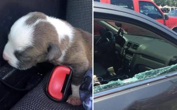 Αστυνομικός έσπασε το παράθυρο αυτοκινήτου για να σώσει ένα κουτάβι