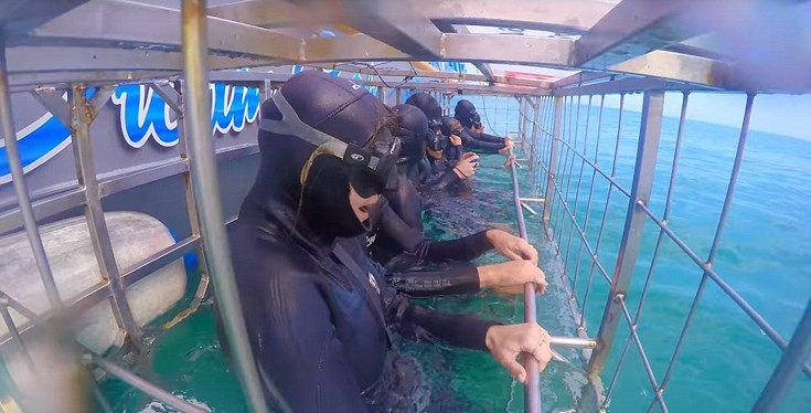 sharks11