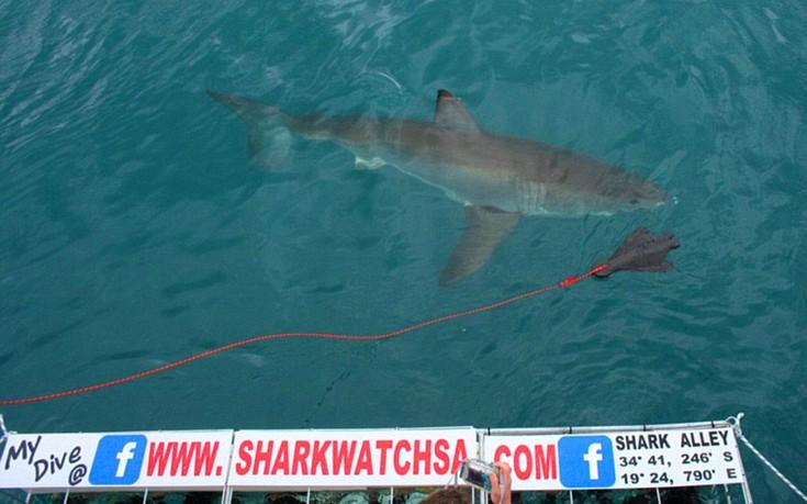 sharks14