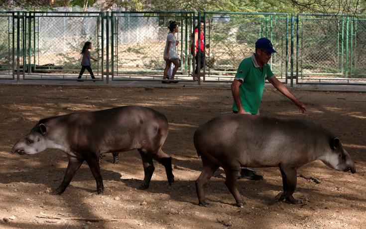 venezuela_zoo10