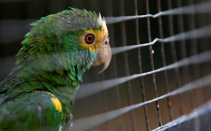 venezuela_zoo14