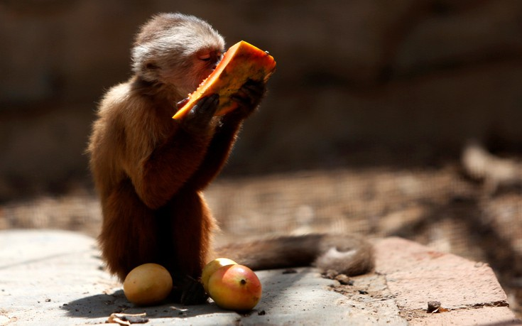 venezuela_zoo15
