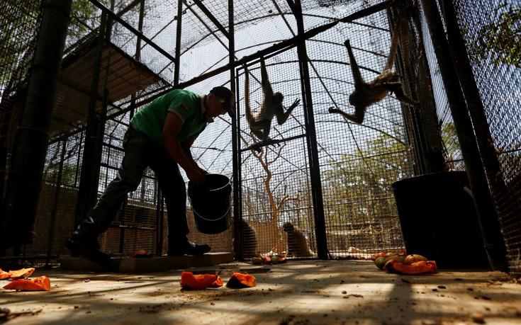 venezuela_zoo17