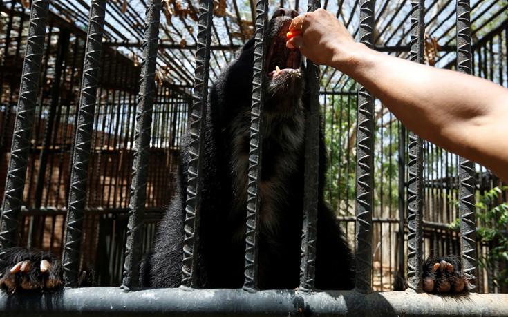 venezuela_zoo6