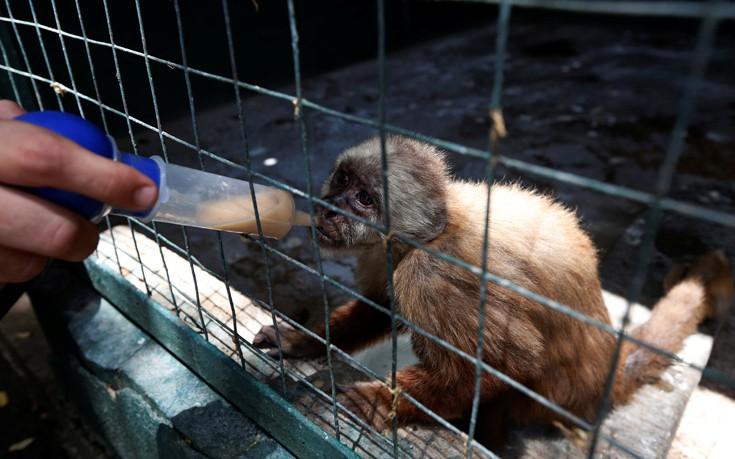 venezuela_zoo7