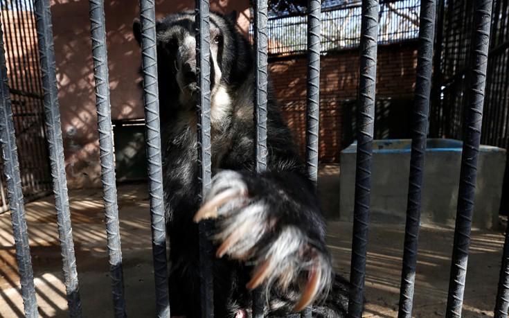 venezuela_zoo8