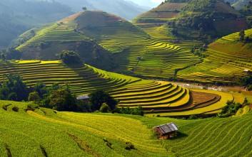 Οι εντυπωσιακοί ορυζώνες του Βιετνάμ