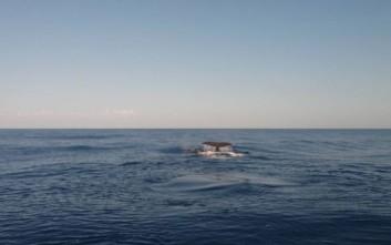 Μυστήριο με τεράστιο κουφάρι φάλαινας που ξεβράστηκε στην Αυστραλία