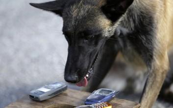 Τα ειδικά εκπαιδευμένα σκυλιά στον εντοπισμό... iPhone!
