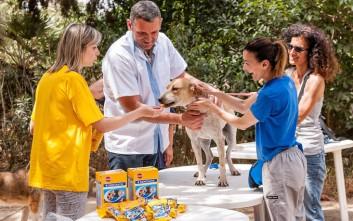 Πάνω από 3.000 σκύλοι υποβλήθηκαν σε δωρεάν οδοντικό έλεγχο