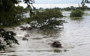 Δασοφύλακες διέσωσαν έξι ελεφαντάκια, είχαν εγκλωβιστεί σε λάκκο με λάσπη