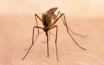 Μέτρα προστασίας από τα κουνούπια: Ποια νοσήματα μπορεί να μεταδώσει το τσίμπημά τους