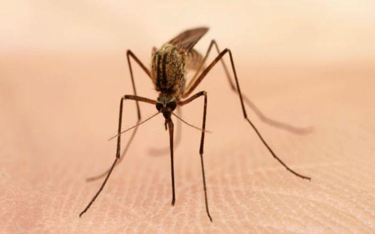 Ολική επαναφορά για τον ιό του Δυτικού Νείλου στην Ελλάδα
