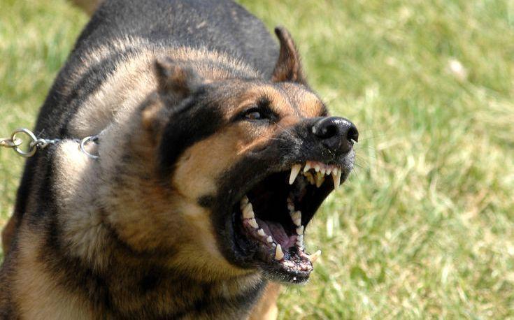 Σκύλος επιτέθηκε σε 4χρονο κορίτσι στη Νέα Άμπλιανη Λαμίας